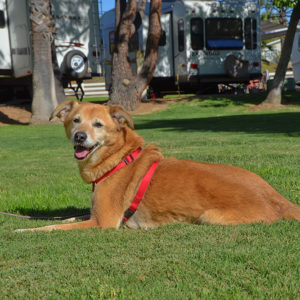 Oak Creek RV Resort Is Pet Friendly